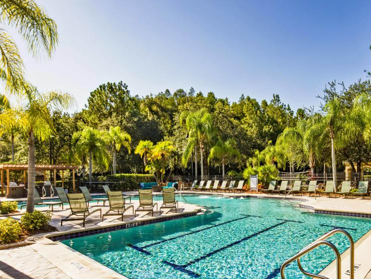 Lap Pool Grand Reserve Tampa Fl 33647