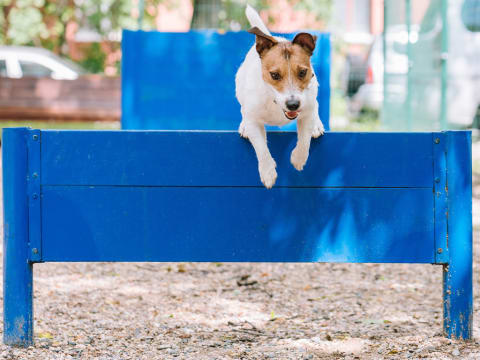 Pet-Friendly Apartments in Landover, MD with a Pet Park & Outdoor Play Space