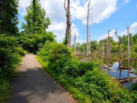 Scenic Walking Trails with 240 Acres of Outdoor Living Space and Wooded Areas