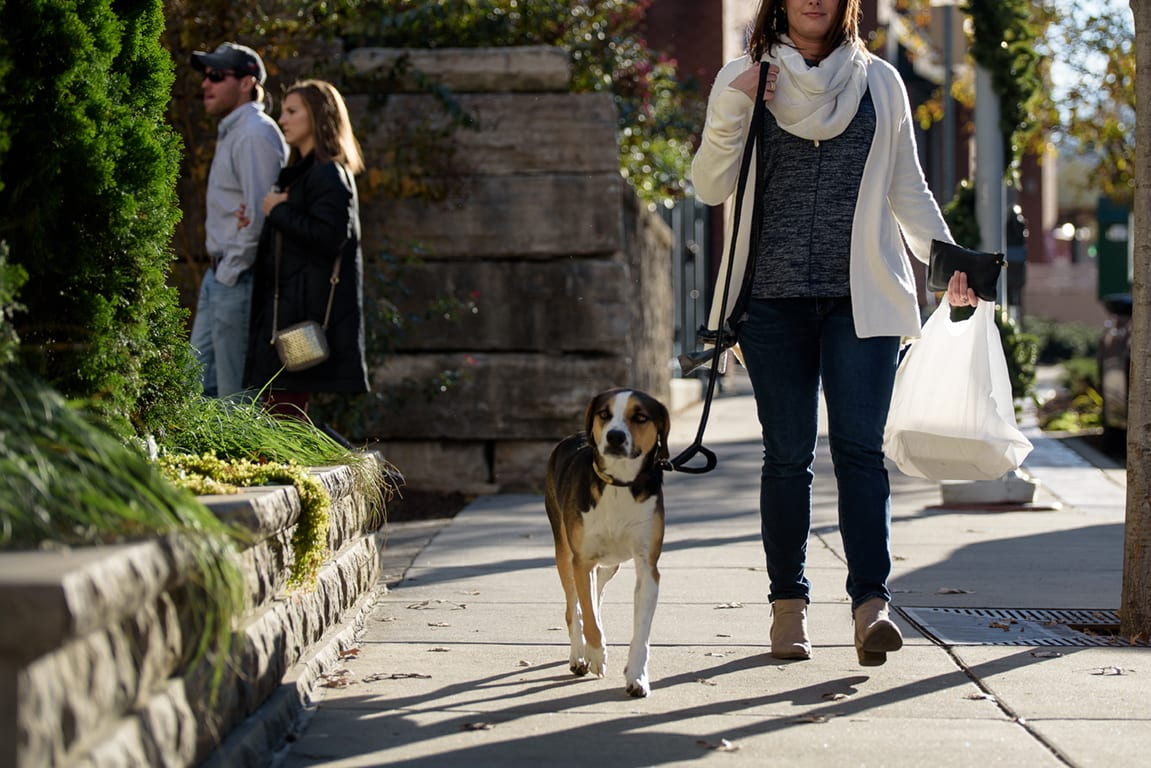 Walking With A Dog at Aertson Midtown, Nashville, Tennessee