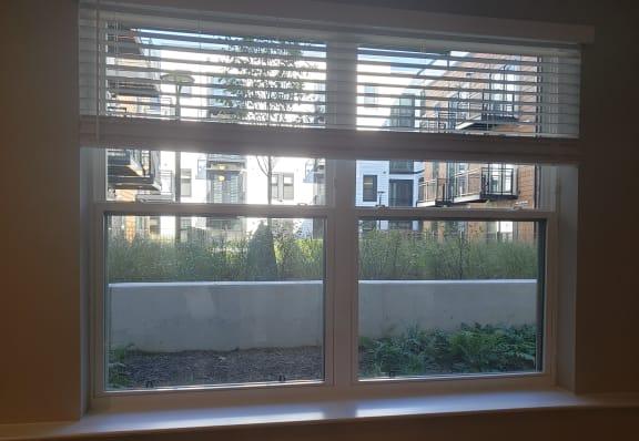 Apartment 217_Window View