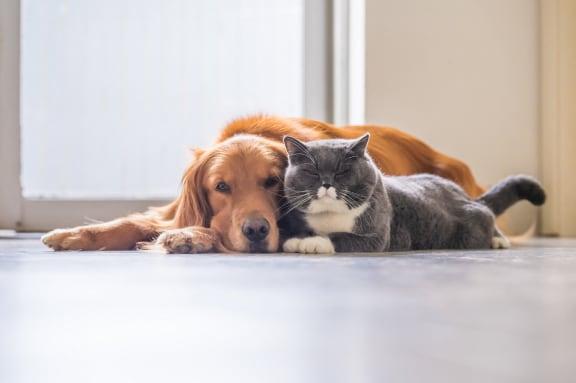 pet friendly community in Edmonton