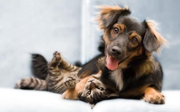 dog and cat cuddling_Cambury Hills Apartments Omaha, NE