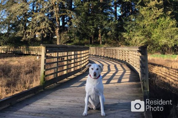 Resident Dog at Pet-friendly Apartments with Off-leash Dog Park and Nature Trails Near Hillsboro Airport