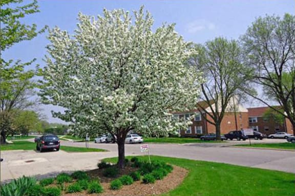 Beautiful Landscaping at The Arbors Apartments, Rockford
