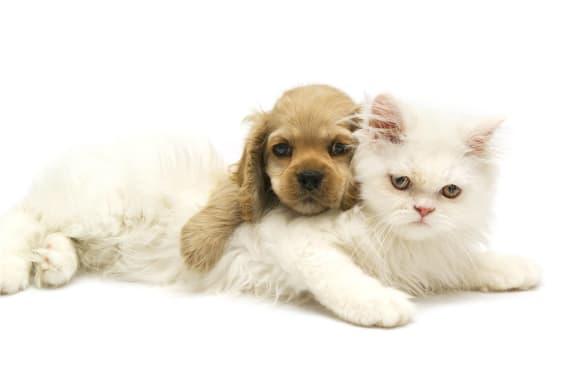 Puppy and Kitten Pet Friendly