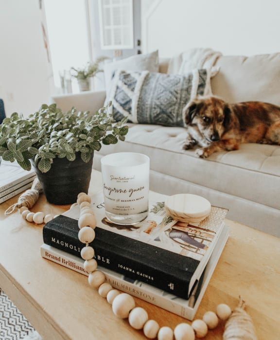 Dog napping on couch next to journal
