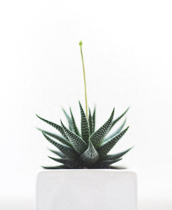 Stock image of succulent