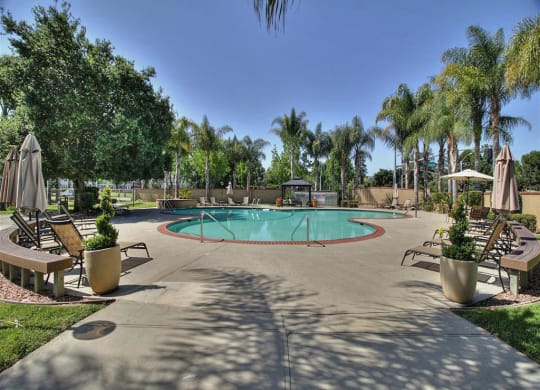 sparkling swimming pool at The Arbors at Mountain View, Mountain View, 94040
