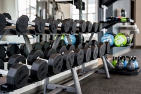 Free Weights