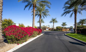 Drive Way at Casitas at San Marcos in Chandler AZ Nov 2020