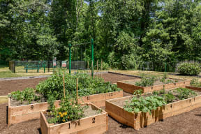 Community Garden |Residences at Westborough