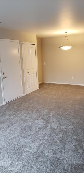Plush tan carpeting with tan walls, and white closet doors.