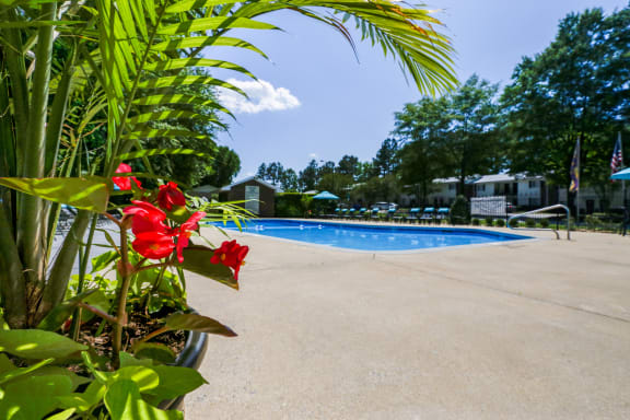 Resort-style swimming pool with planter at Signature Place in Greenville, NC