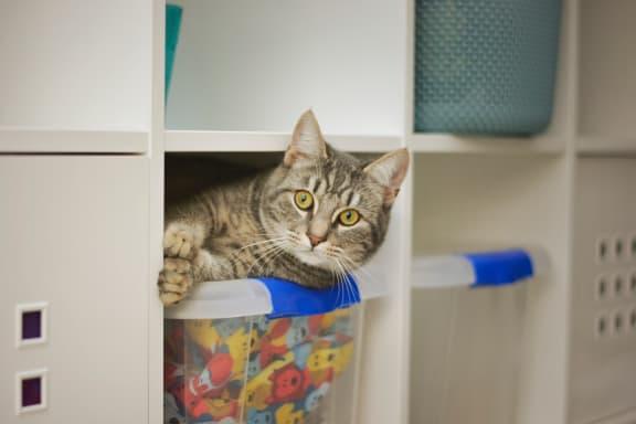 cat_peeking_out_of_closet at Hancock Terrace Apartments, Santa Maria, CA, 93454