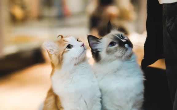 Two Kittens at Hancock Terrace Apartments, Santa Maria, CA, 93454