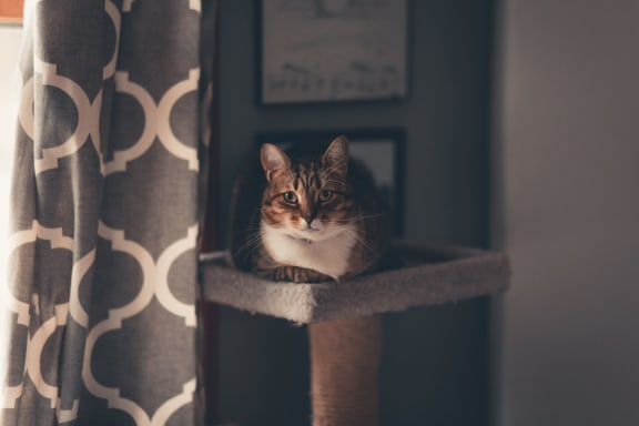 cat_sitting_on_cat_bed at Siena Apartments, Santa Maria, 93458