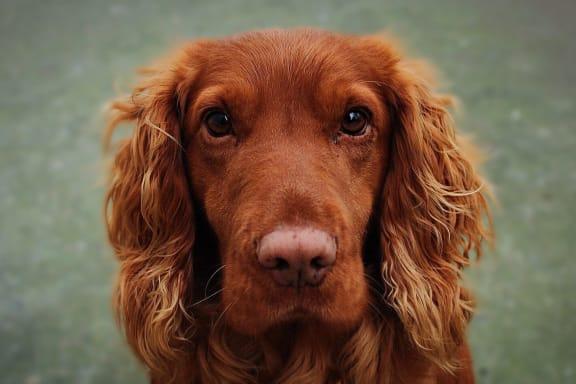 Cute Dog at Tomoka Pointe, Daytona Beach, Florida