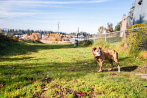 Tacoma Apartments - The Lodge at Madrona Apartments - Dog Park
