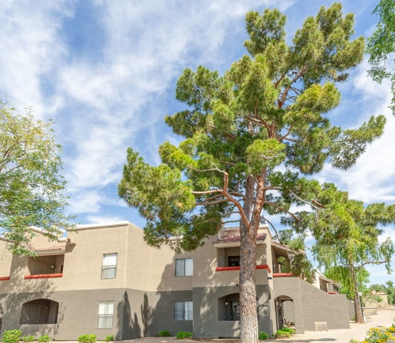 lush trees and landscaping at Ranchwood Apartments in Glendale, AZ