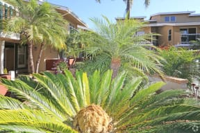 Landscape view accentuating palm trees