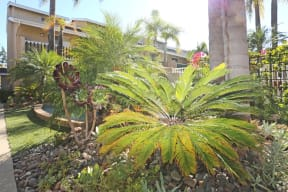 View of plants and landscaping in front of Rental Office
