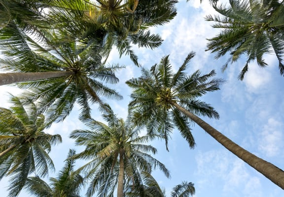 Palm trees_The Crossings at Cape Coral Cape Coral, FL