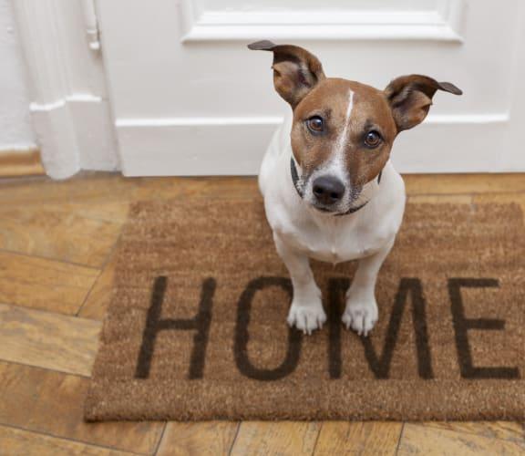 Dog sitting on door matt.