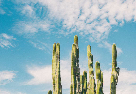 cactus against blue skies at The Sands Apartments in Mesa, AZ