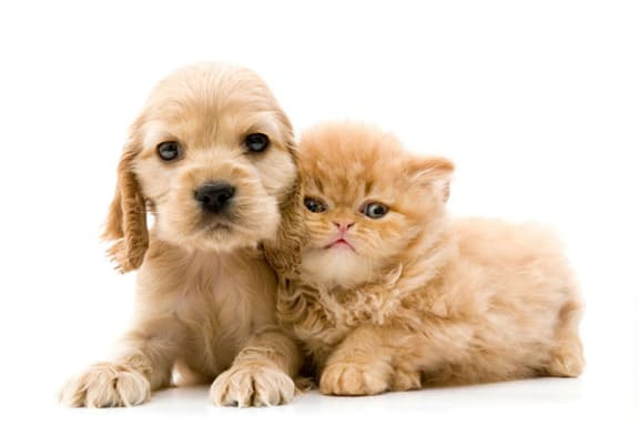 Dogs and Cats are Welcome at Trade Winds Apartment Homes in Elkhorn, NE