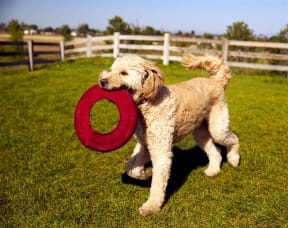 Park for your Furry Friend at Pinyon Pointe, Colorado, 80537