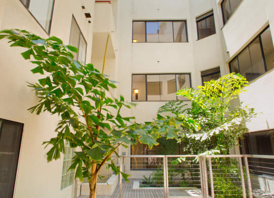 Apartment interior courtyard with a tree, vegetation, and deck.