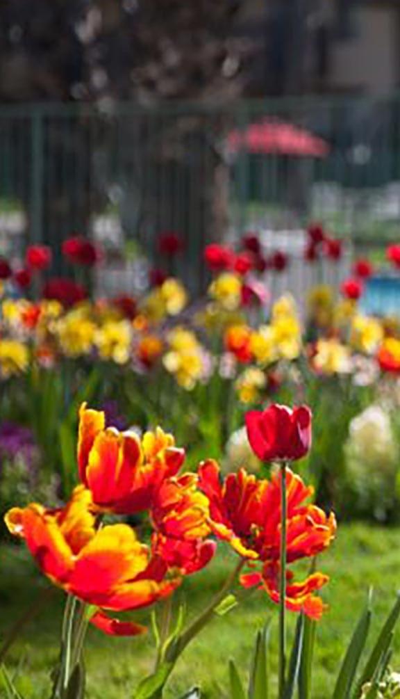 Beautiful Garden at Valley West, California