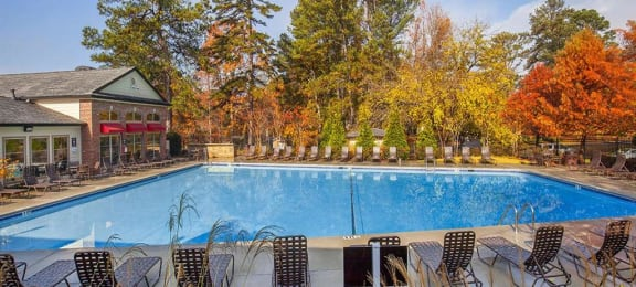Swimming pool surrounded by trees and lounge chairs