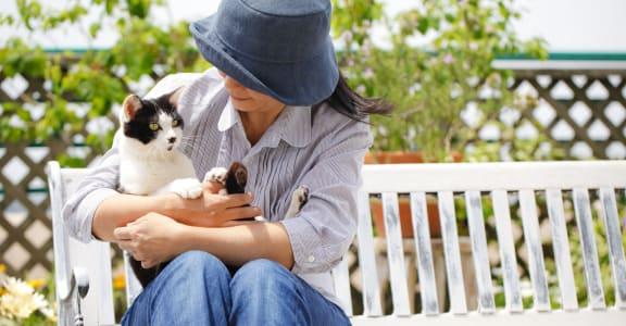 Cat Playing With Senior at 55+ FountainGlen Valencia, Valencia, CA, 91354