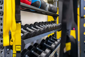 Free Weights and TRX Bands at the Fitness Center