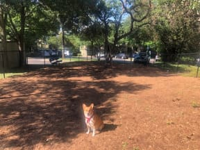 Dog in community dog park  | Museo