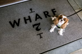 Pet friendly community | Wharf 7