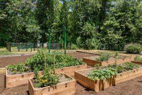 Community Garden  Residences at Westborough
