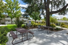 BBQ and Picnic Area with two picnic benches and shade trees