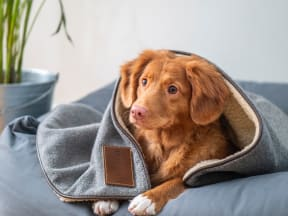 puppy partially covered by a blanket