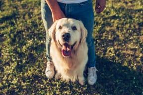 Pet-friendly community at Blu Harbor by Windsor, Redwood City, California