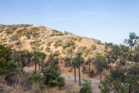 Easy Access to Runyon Canyon from Windsor at Hancock Park, Los Angeles, 90004