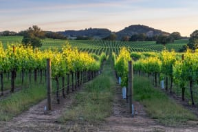 Nearby Wine Country and Nature Trails at Dublin Station by Windsor, California, 94568