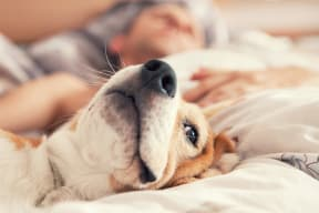 We are a pet-friendly community that welcomes both cats and dogs of any size at Windsor at Delray Beach, Delray Beach, 33483