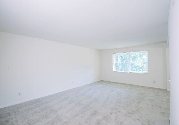 Carpeted bright living room