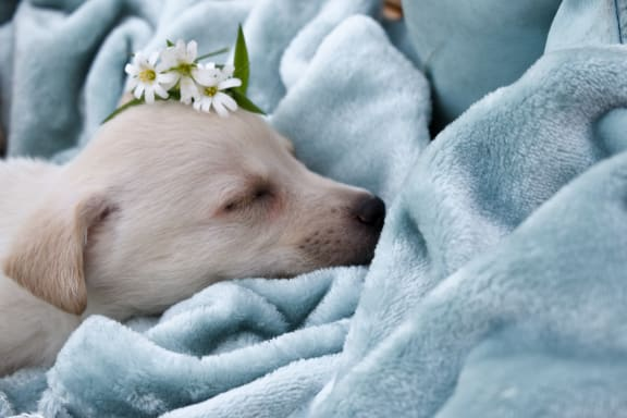sleeping_puppy at Spoke Apartments, Atlanta, GA, 30307