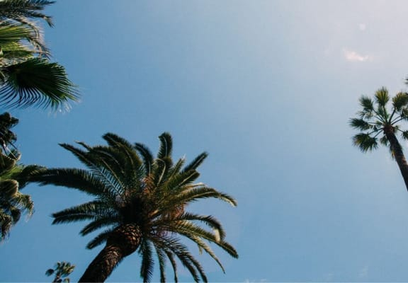View of palm trees from the ground with blue sky in the background