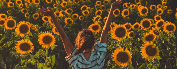 sunflower field near Terramonte Apartment Homes Pomona, CA