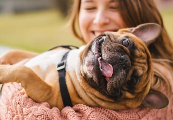 Woman Holding French Bulldog That Has Tongue Dangling Out of Mouth